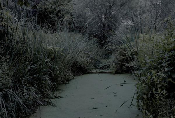 photo d'Alessandro Imbriaco in des vertes et des murmures blog's